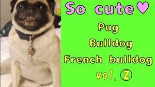 【so Cute】☆pug & Bulldog & French Bulldog☆vol.2  ♪gif Animations♪