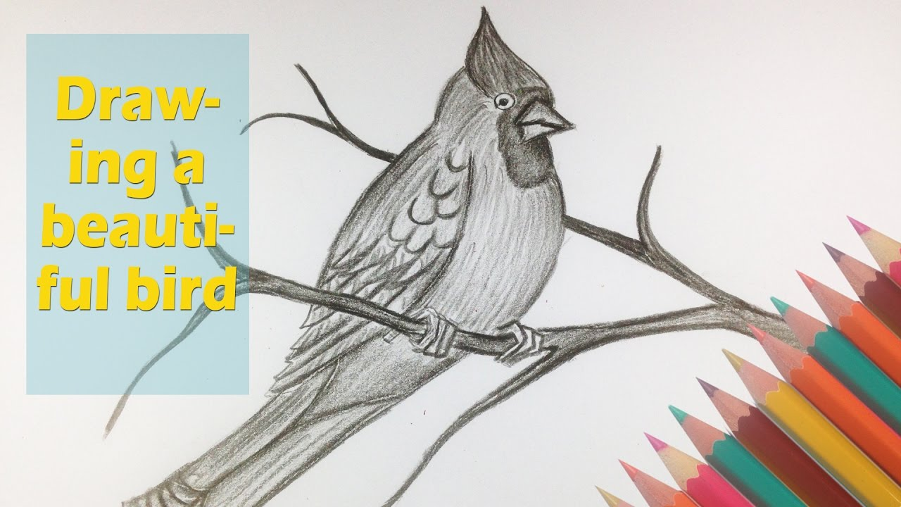 How to draw a beautiful bird amazing animal drawing videos