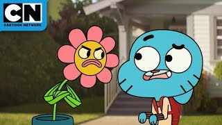 The Amazing World of Gumball | Green Week | Cartoon Network