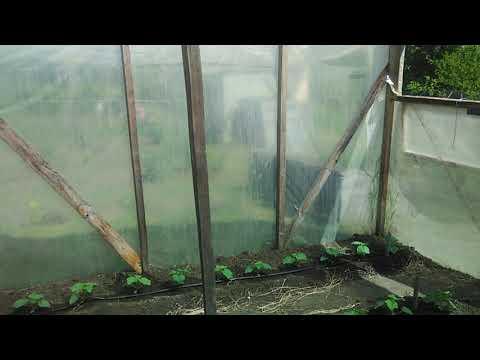 Вопрос: Как в жару поливать огурцы, когда поливать огурцы в жару?