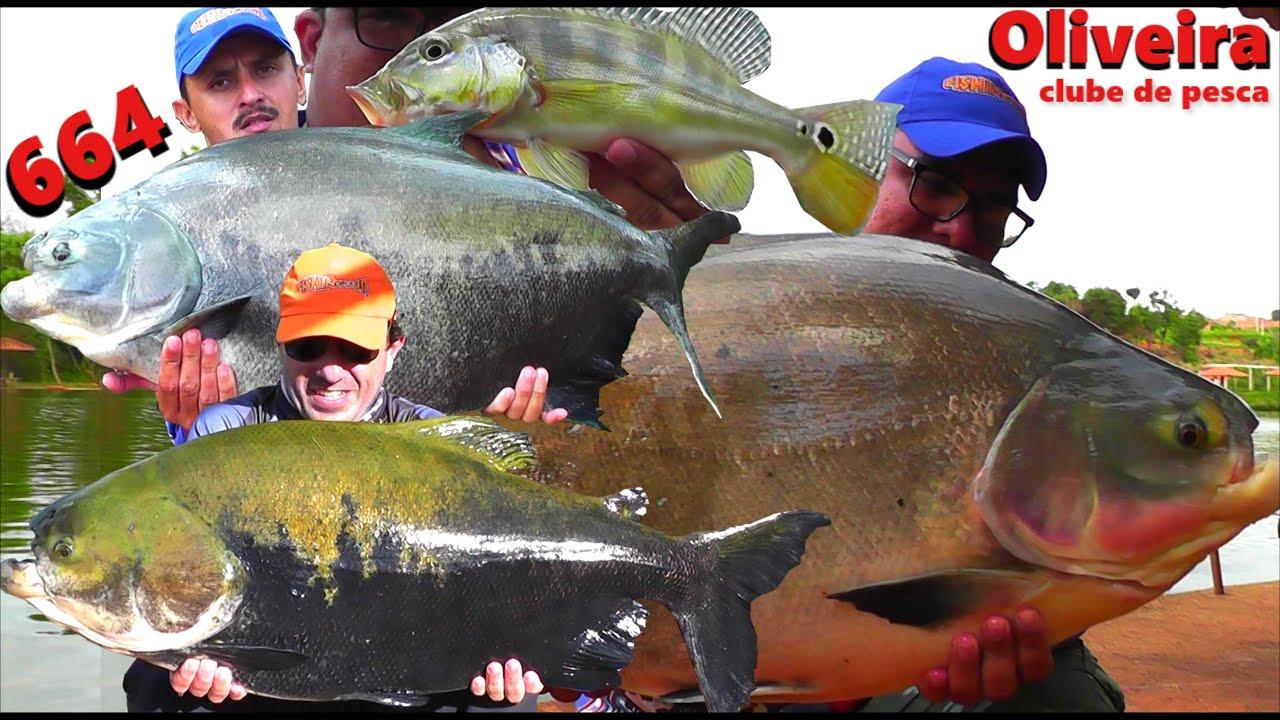 Dia Difícil de pescaria com muitos Tambacus e Tambaquis no Oliveira - Programa Fishingtur na TV 664