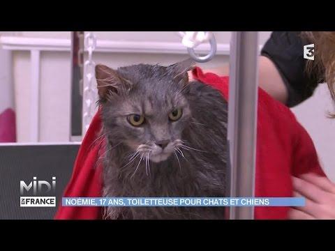 ANIMAUX & NATURE : Noémie, 17 Ans, Toiletteuse Pour Chats Et Chiens