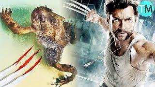 10 ANIMALES CON SUPER PODERES Reales ( La Rana Wolverine!!!)