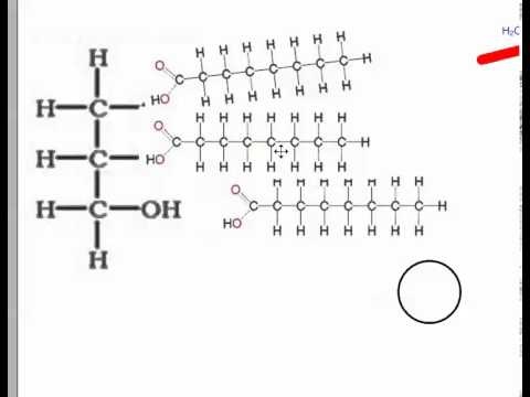Condensation and Hydrolysis (IB Biology)
