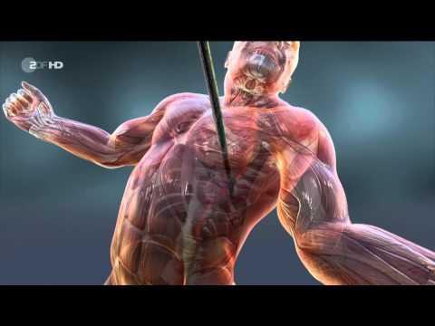 DOKU HD: Die Apokalypse der Neandertaler