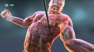 Repeat youtube video DOKU HD: Die Apokalypse der Neandertaler