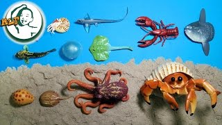 Learning sea animals names for kids | part 7 | 海の動物|