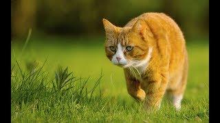 СМЕШНЫЕ  КОТЫ. Самое смешное про котов. Видео приколы про котов