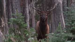 Colorado 2013 archery hunt unit 61 pt 1