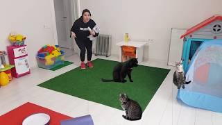 Kedilere Süt İçirdik  سوسو يريدوا نفس القطة  !!!