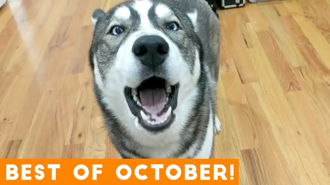 Ultimate Animal Reactions & Bloopers of October 2018 | Funny Pet Videos