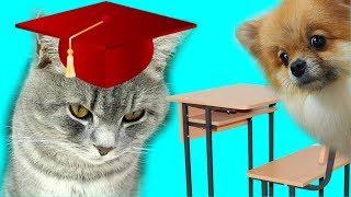 Школа котов и собак. Кот Макс не хочет учится. С озвучкой