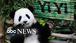 Democrats debate, Texas heat, Yi Yi the giant panda: World in Photos, Aug. 1