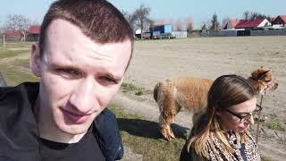 #ALPAKI3 Jak powinna wyglądać idealna alpaka? Wywiad z Karoliną Grys cz. 2