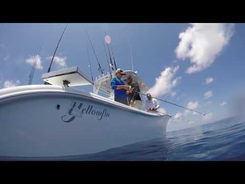 Fishing 100 miles out of Tampa Bay! Yellowfin 36 grouper,red snapper,lionfish