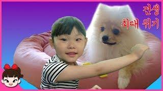 뽀뽀 예방접종 주사맞다. 라임의 애완동물 강아지 키우기 동물병원 후기  LimeTube & Toy 라임튜브