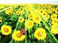 21 июня Летнее Солнцестояние и Позитивные Перемены в Жизни!!!