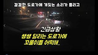 쌩쌩 달리는 도로가에 꼬물이들 어떡해?