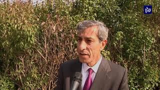 بلدية اربد تقتلع أشجار الزينة من بعض شوارع المدينة  - أخبار الدار