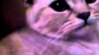 кот тимка и кошка масяка ложатся спать