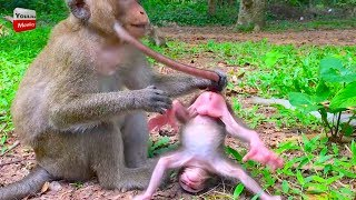 MOG New baby monkey cry and cry why kidnapper do like this very pity baby Youlike monkey