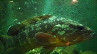 Аквариумные рыбки Каменари,Черногория