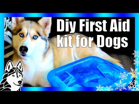 DIY DOG FIRST AID KIT and BLOAT KIT | First aid for dogs