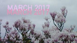 MARCH 2017 VLOG