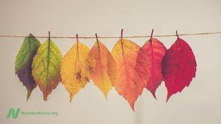 Proč lidé na podzim tloustnou?