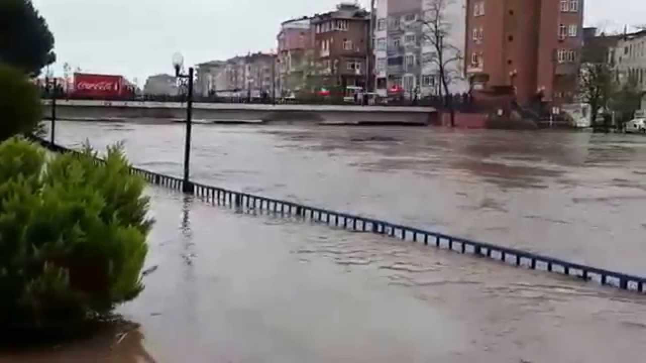 Sel nedir, nasıl oluşur