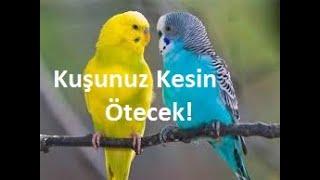 Kuşunuzu Kesin Öttürecek Kuş Sesleri