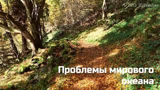 Защита природы,соц.экологический ролик