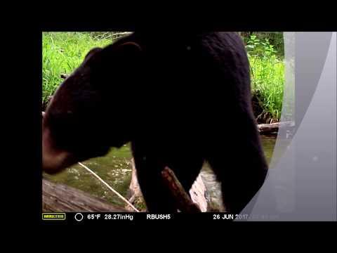Video: Fotografo filma una grande varietà di animali selvatici mentre...