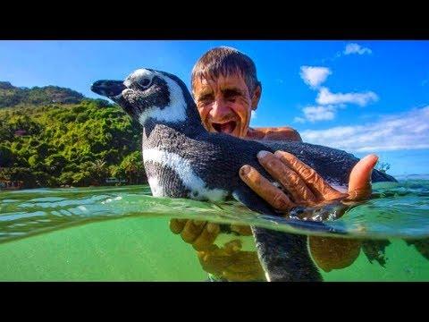 Anziano salva la vita a un pinguino.Il pinguino per ringraziarlo fa una cosa inimmaginabile