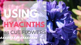 How to Use Hyacinth as Cut Flowers Flower Harvest Cut Flower Farm Florist Gardening Garden Growing