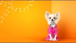1 серия гав стори собаки из приютов