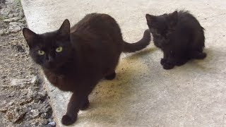 Black kitten with mother cat on the street