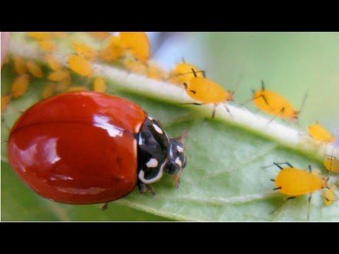 Planejamento, Implantação e Manutenção de Jardins - Pragas e Doenças