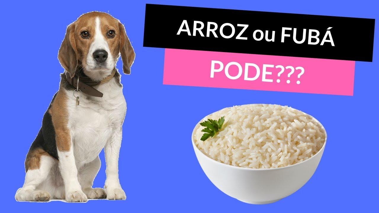 arroz para cachorro engordar