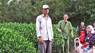 Green Tea Newbies (13) Obubu Tea Farm, autumn tea picking おぶぶ茶苑