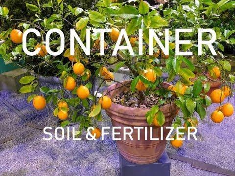 Proper Soil & Fertilizer for CONTAINER Fruit Trees