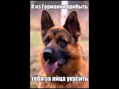Собаки и прочие агрессоры