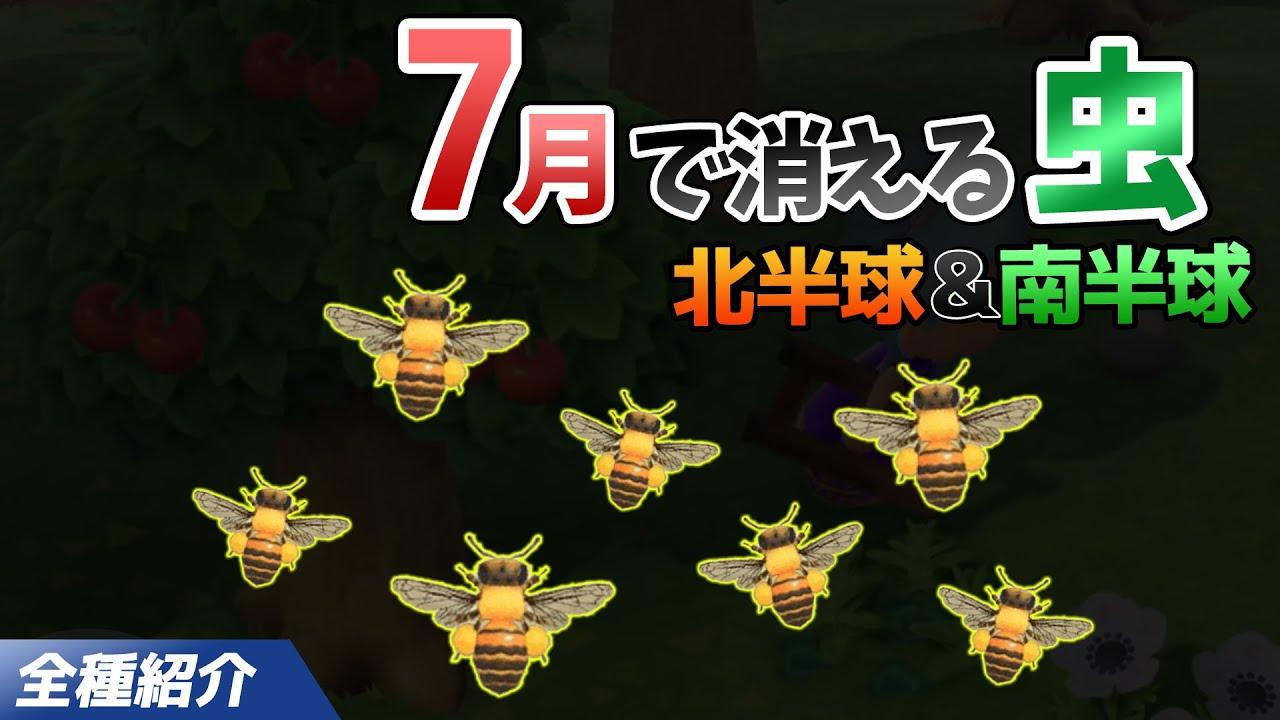 【あつ森】7月で消える虫を全て紹介!出現時間や条件・売るときの値段についても徹底解説!ミツバチを効率よく捕る方法【あつまれどうぶつの森 7月の虫図鑑コンプリート】
