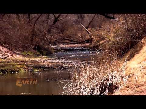 The Shrinking San Pedro River