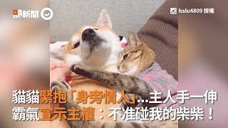 貓貓緊抱「身旁情人」...主人手一伸 霸氣宣示主權:不准碰我的柴柴!