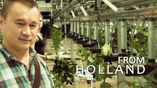 #098 Профессиональная гидропоника в Голландии. Теплица с розами (3-я серия).(Экскурсия по одной из крупнейших теплиц с розами в Голландии с автоматизированной гидропоникой. BAC: http://gorshk..., 2014-11-18T12:09:24.000Z)