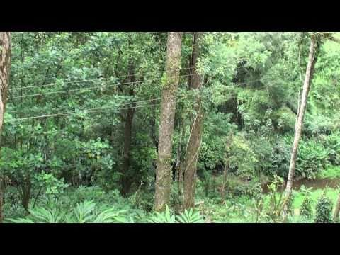 Forest Haven resorts, Munnar