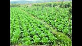 Farming in Zimbabwe