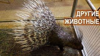 ДРУГИЕ ЭКЗОТИЧЕСКИЕ ЖИВОТНЫЕ  на ферме Сергея Балаева