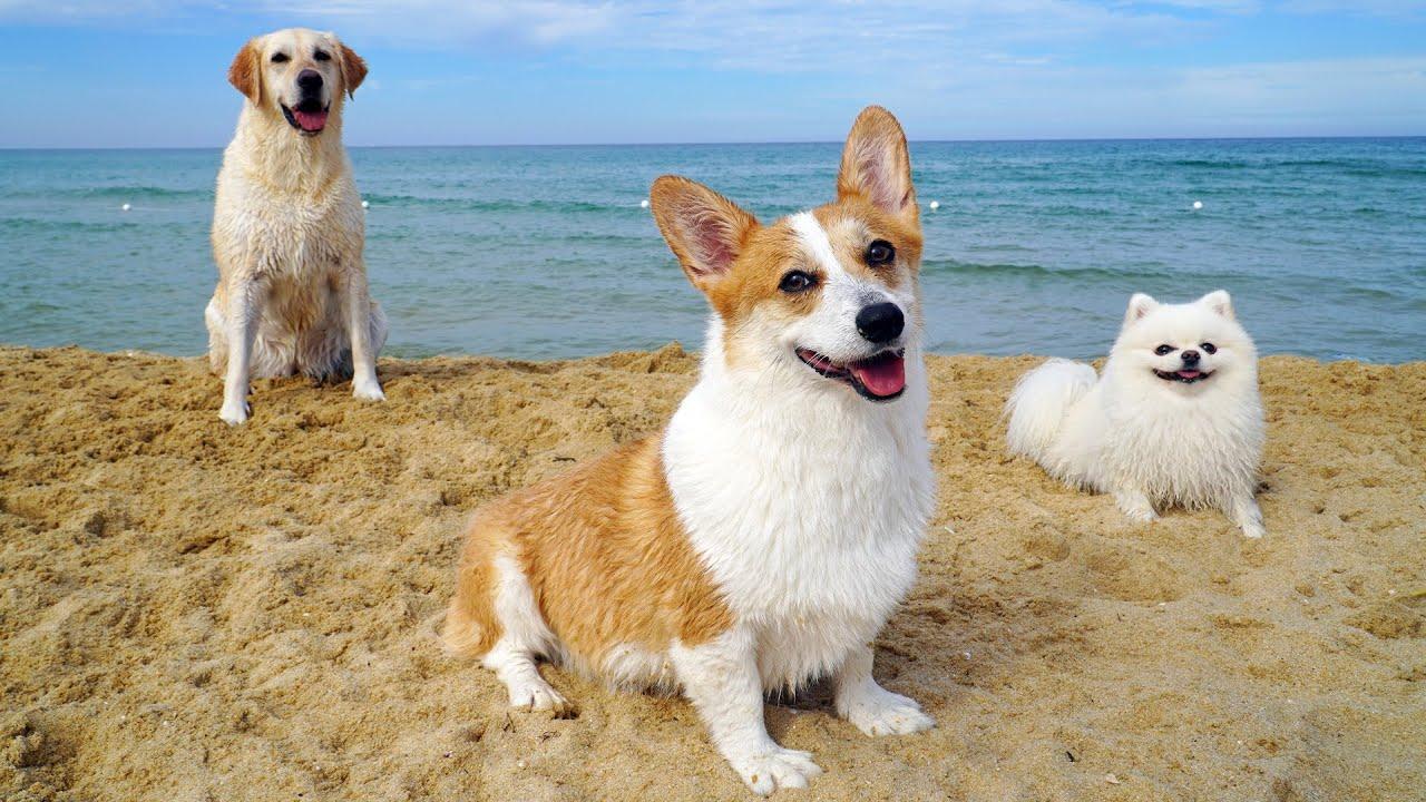 더운 여름, 강아지와 함께 바다에서 수영해요!